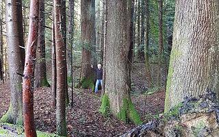 ProCoBois, la société experte en exploitation forestière